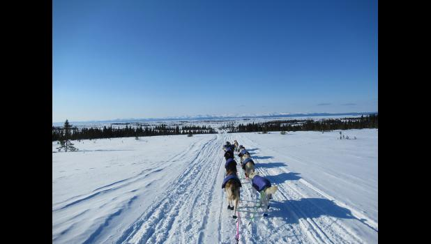 Traveling by dog team en route to Elim on the Iditarod Trail.